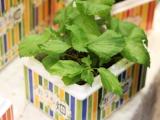 野菜栽培キットおうち畑