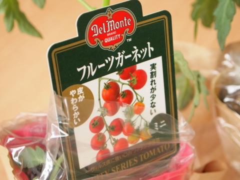 ミニトマト栽培セット