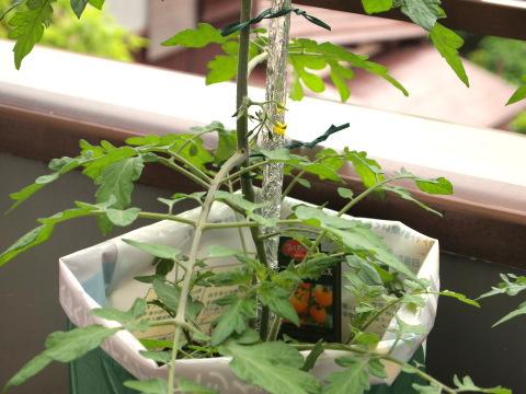 デルモンテのミニトマト