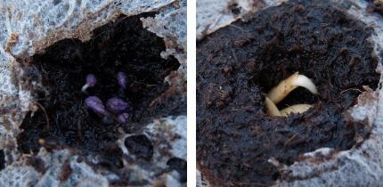 無印良品「Flour MUJI」野菜栽培キット