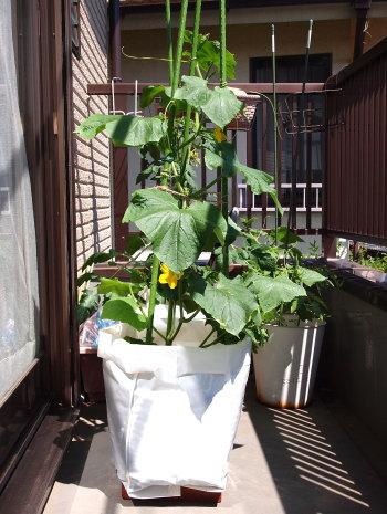 無印良品 野菜栽培キット