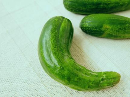 無印良品野菜栽培キット ミニキュウリ
